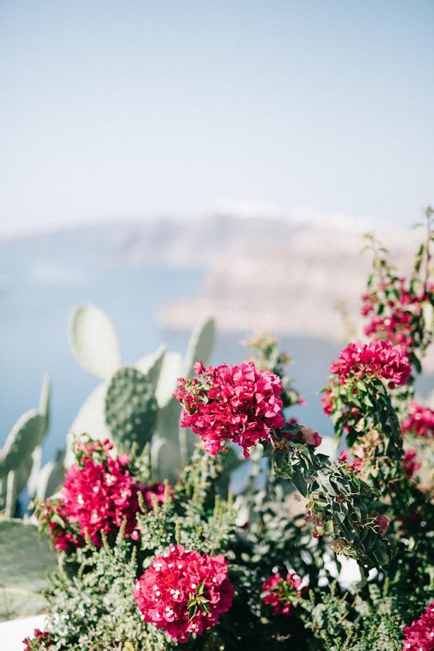 Bougainvillea & cacti - Santorini wedding