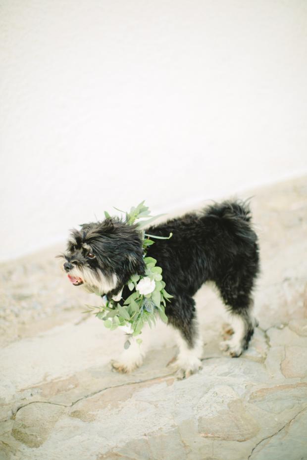 Wedding dog- ring barrier