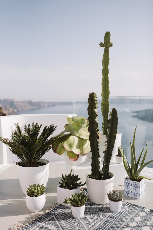 Bohemian cactus wedding
