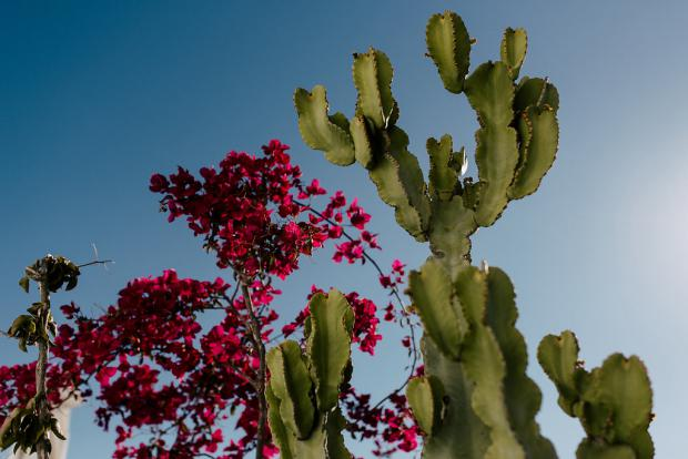 Greek island- cactus and bougainvillea