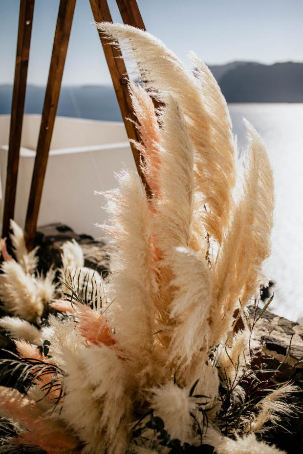 Pampas grass obsession