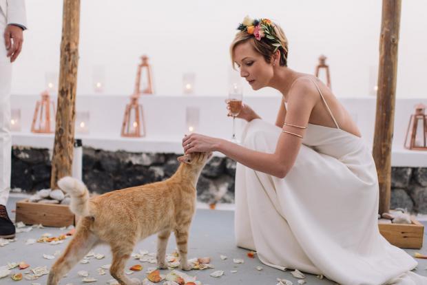 Wedding pets