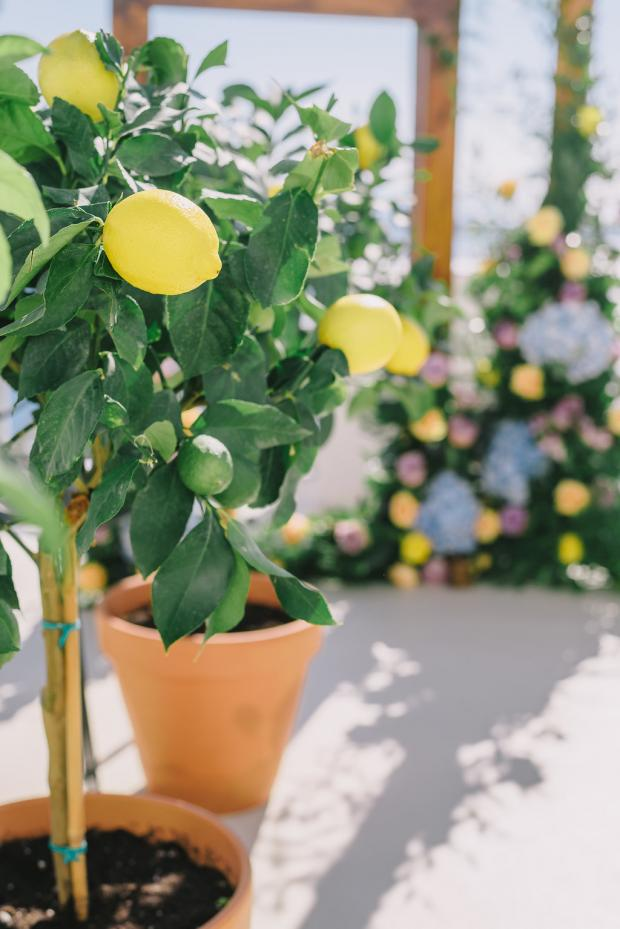 Lemon wedding aisle