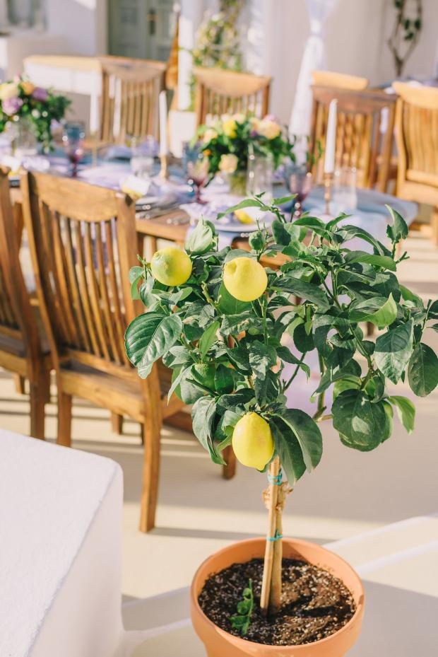 Lemon Mediterranean wedding